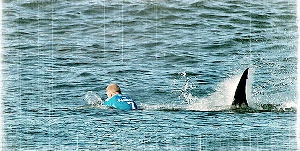 fanning-vs-shark